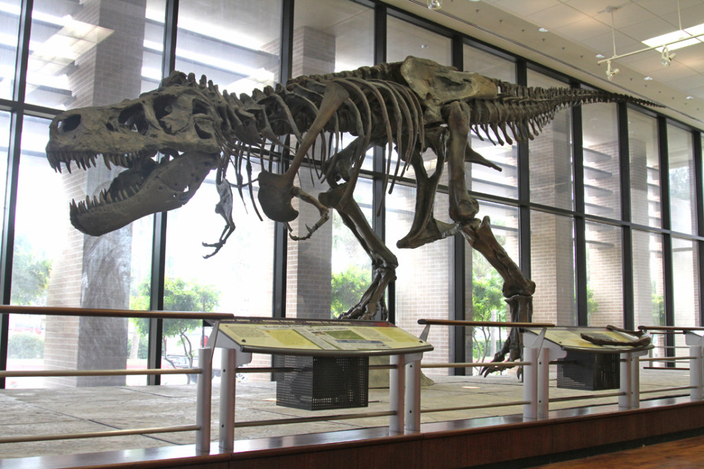 Sue, a Tyrannosaurus rex skeleton, is on display in the Visitors Center on the Edinburg campus. Sue, which stands at 12 feet and is 42 feet long, was brought to UTRGV by the McDonald's Corp. and presented locally by McDonald's Rio Grande Valley Owner Operators. The exhibit will remain open until Jan. 8. The Field Museum in Chicago created the exhibit./Lesley Robles/The Rider