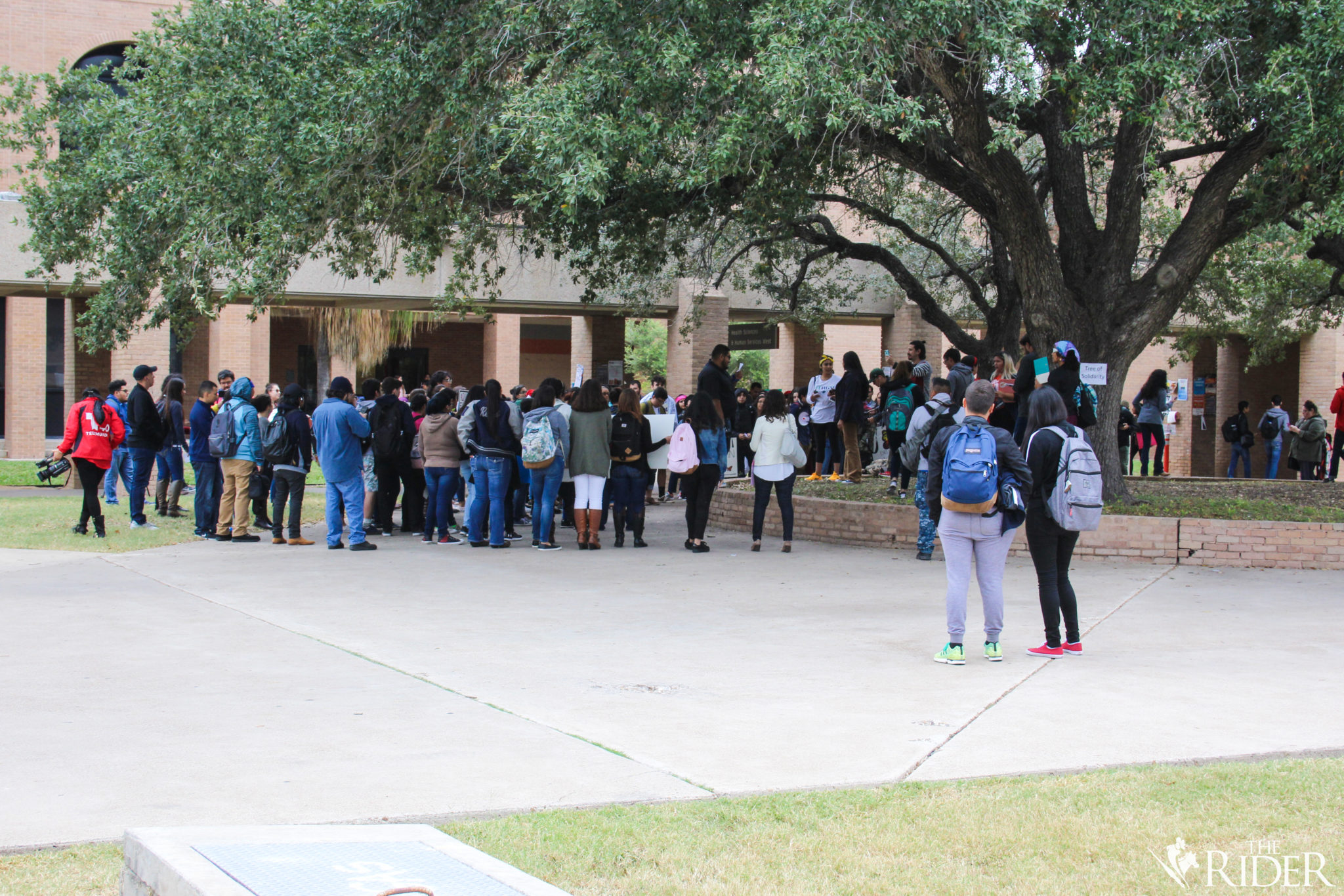 """Campus community members gather under the Quad's """"Tree of Solidarity"""" on the Edinburg campus before marching toward the Student Services Building."""